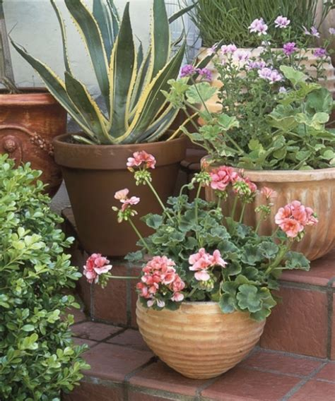 potted trees for patio 25 best of outdoor potted plants and flowers 4373