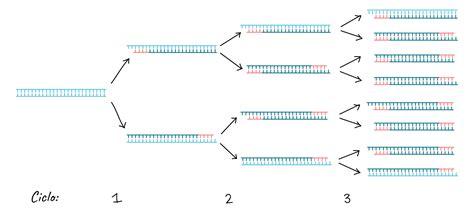 bureau de la pcr reacci 243 n en cadena de la polimerasa pcr khan academy rtech