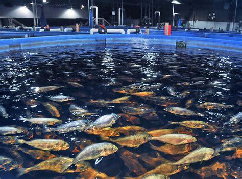 officials concerned  fish  local ocean farm