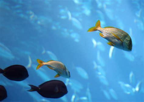 fish  stock photo tropical fish swimming