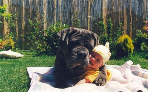 Dogs Who Love Their Human Babies Like Their Own - One