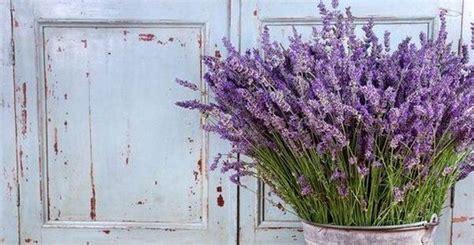 piante d arredo piante aromatiche d arredo per colorare e profumare la casa