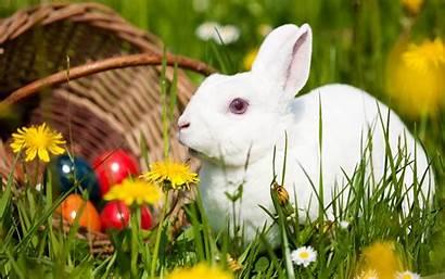 Rabbit Desktop Wallpapers Backgrounds Computer