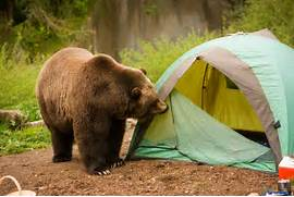 Antique Bear Attack Sleeping Bag Pict Camping Essentials For The Best Tips Gear Reviews