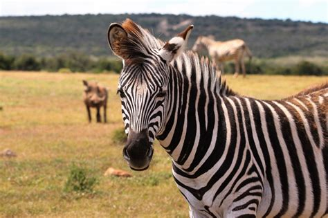 central kruger wildlife safaris kurt safari