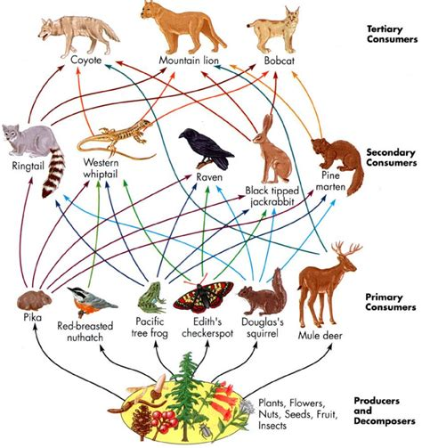 cuisine web tropical rainforests 4 food chains and food webs of the