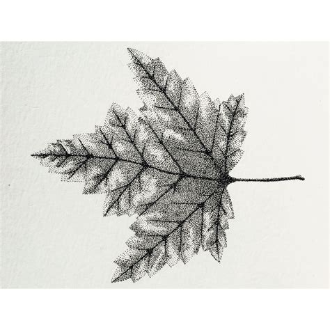 leaf dots drawing stippling rotring ink