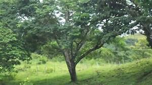 Venta De Finca Situada En Santo Tomas Jicarito Nicaragua