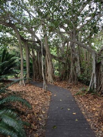jacks christmas trees formerly eljac miami fl selby botanical gardens sarasota fl florida gardens sarasota florida