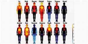 Estudio revela reaccion del cuerpo humano ante emociones for Estudio revela reaccion del cuerpo humano ante emociones