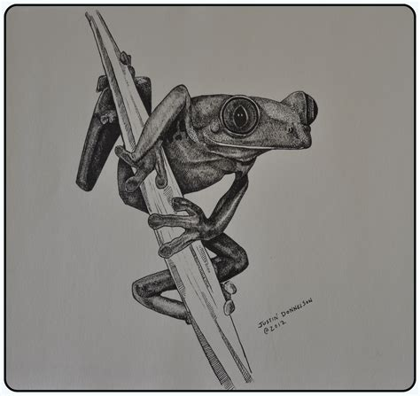 Frog Drawing Pen And Ink By Justindonnelson On Deviantart