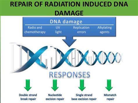 Radiation Basics And Radiation Damage