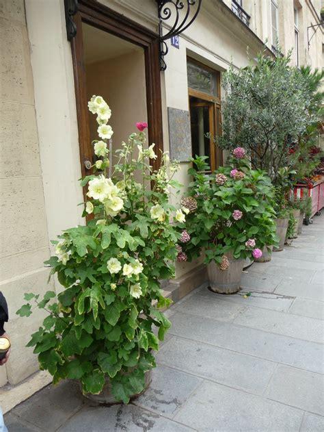 planter des hortensias en pot les roses tr 233 mi 232 res poussent en bac c 244 t 233 jardin