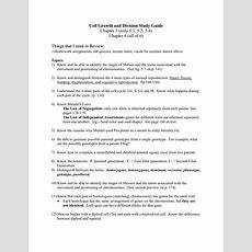 Chapter 10 Mendel And Meiosis Worksheet Answers  Free Printables Worksheet