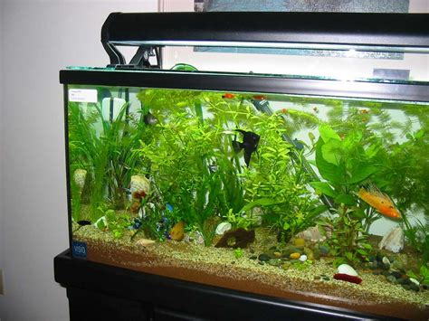 fish aquariums aquarium designs to suit your home ideas 4 homes