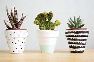 Pot Pour Cactus : cacti cacti pot plants flowers and plants pinterest ~ Premium-room.com Idées de Décoration