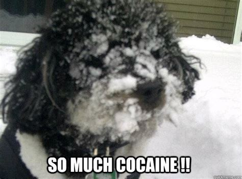So Much Cocaine Meme - 139 best images about drugs on pinterest snow meme bear images and bear meme