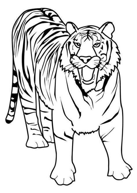 jacques cuisine coloriage tigre dessiner sur hugolescargot com