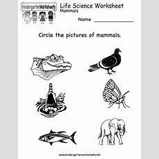 Kindergarten Life Science Worksheet Printable Worksheets