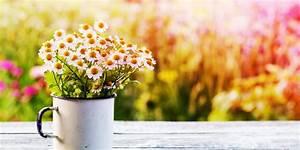Blumen Bewässern Mit Wollfaden : wifi blog wien sag s mit blumen ~ Lizthompson.info Haus und Dekorationen