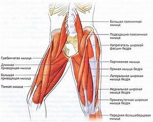 Мазь от защемления нерва в тазобедренном суставе