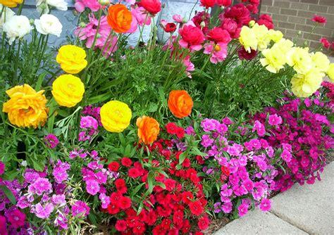 Winter Flowering Plants Flower Garden Ideas Full Sun