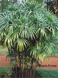 plante tropicale d exterieur