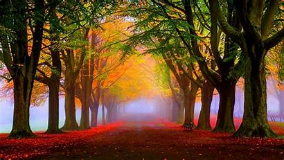 Fall Foliage Wallpapers Wallpapersafari