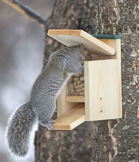 how to make a squirrel feeder box woodworking projects