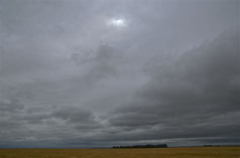saskatchewan wheat field   grey sky prairie girl