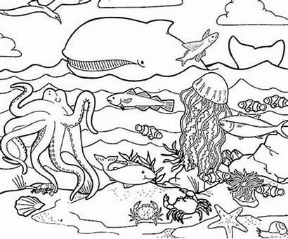 Sea Coloring Printable Ocean Pages Creatures Under