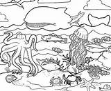 Sea Coloring Printable Ocean Pages Creatures Under Sheets sketch template