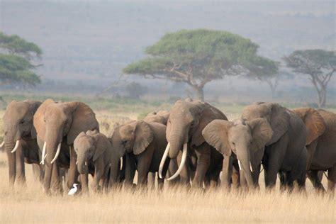 safari photography equipment  tips  tanzania travelogue