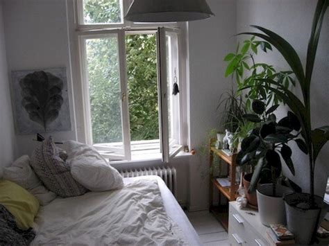 Aesthetic Bedroom Plant