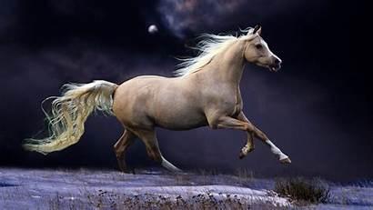 Horse Paint 4k
