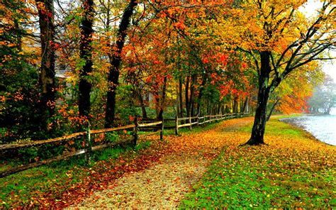 Colourful Autumn Background by Fall Colors Wallpaper Backgrounds Wallpaper Cave