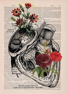 floral anatomy illustrations on the pages of books