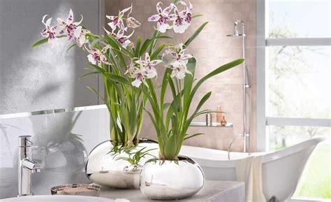 Pflanzen Für Schattige Plätze In Der Wohnung pflanzen für schattige plätze in der wohnung pflanzen f r schattige