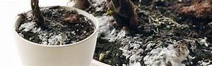 Schimmel Auf Blumenerde : schimmel im blumentopf und auf der blumenerde ~ Watch28wear.com Haus und Dekorationen