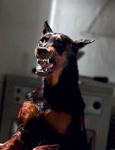 Pin The-evil-doberman-2560x1600-wallpapers-download ...