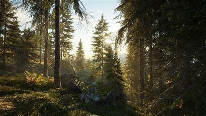 Wild Call Thehunter Wallpapers Forest Background Hunting