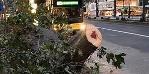 Baumstumpf Entfernen Hamburg : bilanz nach sturmtief xavier sieben tote hunderte ~ Lizthompson.info Haus und Dekorationen