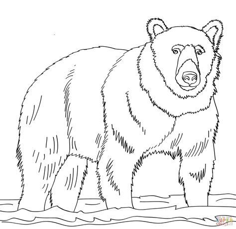 disegno  orso bruno sullacqua da colorare disegni da