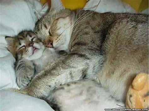 Cute And Funny Sleeping Cats (funny Pictures) Lovesepphoras