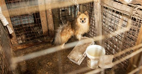 No Pet Store Puppies Day Is July  Help Us Raise Awareness For Puppy Mill Dogs Aspca