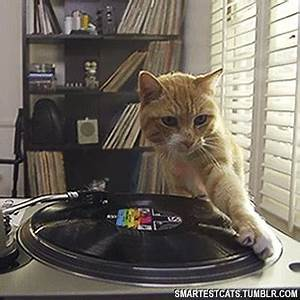 Party Cat GIFs - Find & Share on GIPHY