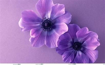 Purple Fire Kindle Flower Flowers Wallpapers Desktop