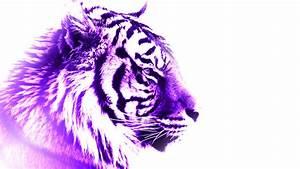Purple Tiger by FlamingShrapnel on DeviantArt