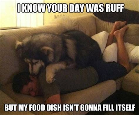 Dog Cooking Meme - 30 funny dogs who don t believe in personal space because cuddling is way more important qm
