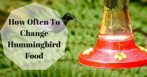how often to change hummingbird food useful tips for you